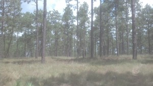 A snapshot from my day job.  Kisatchie National Forest.
